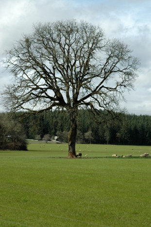 TREE:Ferguson:3:07