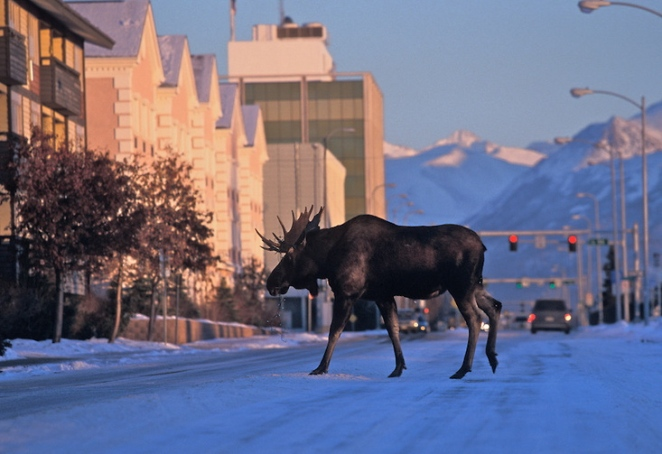 Anchorage-Alaska-26
